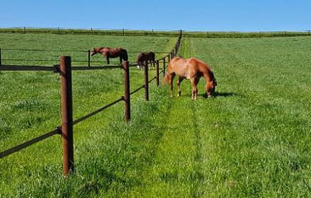 Quel type de pension est la plus adapté à son cheval? chez Valley in Stones en Picardie